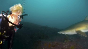 ''Distressing'' … Greens MP Cate Faehrmann spots a grey nurse shark with a hook in its mouth during a dive off Fish Rock.