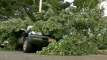 Winds bring down a tree in Sydney.
