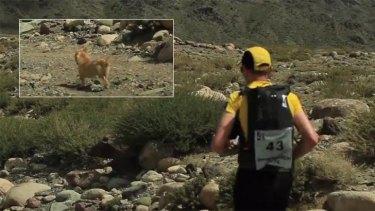 Gobi's diminutive legs carried her over 125 kilometres of testing terrain alongside Aussie runner Dion Leonard.