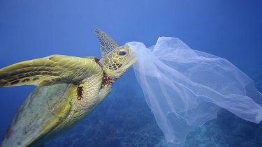 """The Senate committee reports """"toxic tide"""" of marine plastic pollution."""
