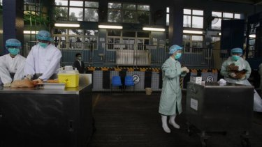 Officials from the Centre for Food Safety get blood and swab samples from chickens imported from mainland China at a border checkpoint in Hong Kong.