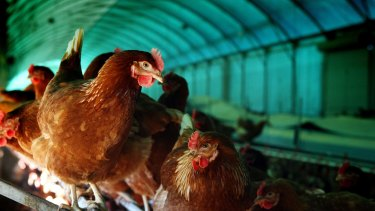Consumer affairs ministers have set a legal definition for free range eggs.