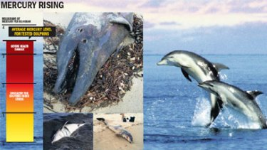 Dolphins in Port Phillip Bay hit by mercury poisoning.
