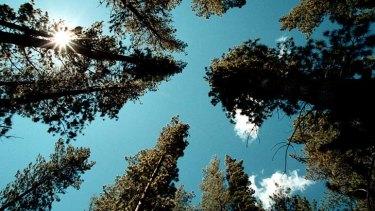 Cut carbon not trees.