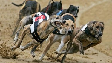 Greyhound racing has been criticised after multiple examples of cruelty to dogs were uncovered.