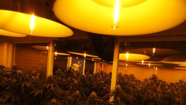 Corrupt sparkies build giant power boards for grow houses that can divert (and steal) about $1000 of electricity a day.