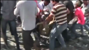 Rescuers tranquilised the lion before transporting the big cat to an animal care centre.