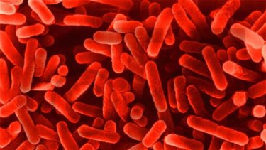 Legionella bacteria can cause a bacterial lung infections in people who are elderly or have other illnesses.