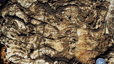 Stromatolites built a large component of the reef.