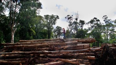 Time to log off ... native forest logging is becoming economically unviable.
