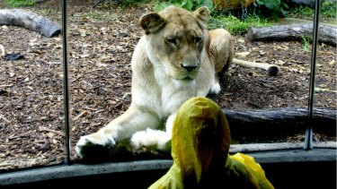 Modern zoos have reinvented themselves amid debate over the ethics of keeping captive wild animals.