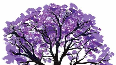 As familiar as the harbour ... jacarandas.