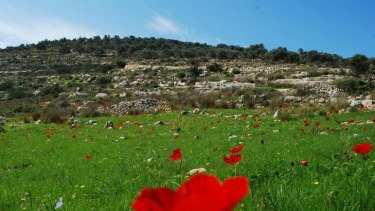 Walking enthusiast Stefan Szepesi captured this image of wild flowers in the West Bank.