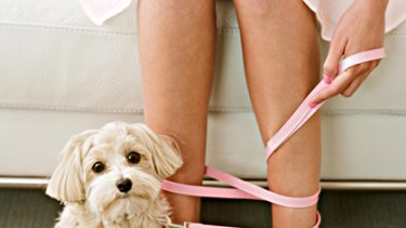 Puppy lovers ... new dating site brings like-minded pet lovers together.