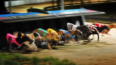 Going to the dogs ... a night at the Greyhounds.