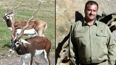 Caught in the crossfire ... the blackbuck antelope species being targeted by Bob McComb.