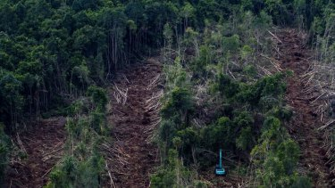 The big cut: clearing of peatland forests on Padang Island.