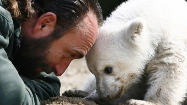 A playful Thomas Doerflein and Knut. Their bonding became too much for zoo officials.