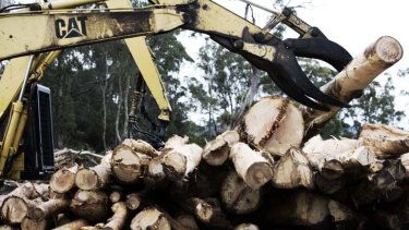 VicForests has been accused of logging protected rainforests.