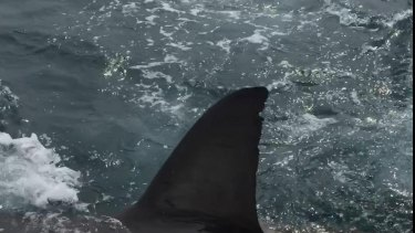 The shark circled Mr Hoey's boat.