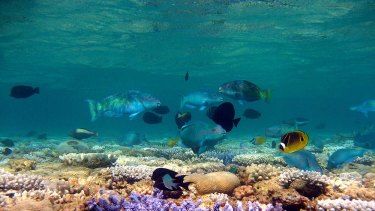 The Great Barrier Reef in all its glory.