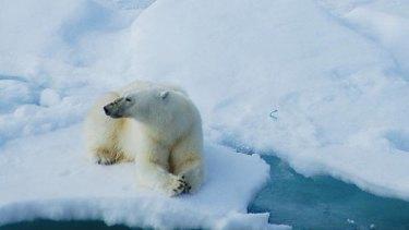 Endangered ... not just the polar bear.
