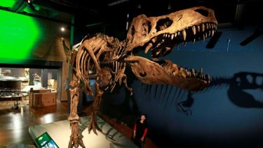 Titanic T-Rex: A replica of the largest tyrannosaurus ever found on display at the museum.