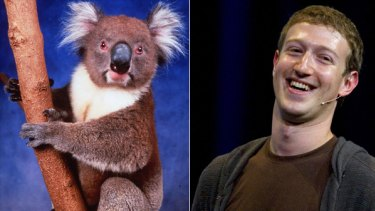 A new book set to be released next week makes the allegation that Facebook founder and CEO Mark Zuckerberg and colleagues dined on koala meat in 2004.