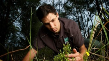 So close to Sydney and yet so new: Julian's Hibbertia and its finder, Andrew Robinson.