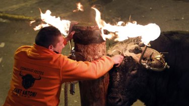 A reveller releases a bull with flaming horns during a Spanish festival.