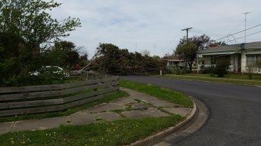 Several power lines were damaged near Ballarat.