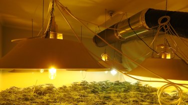 An estimated 1500 grow houses operate across Victoria.