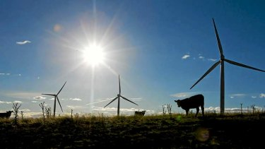Cows stand near wind turbines operating on Capital Wind Farm in Bungendore.