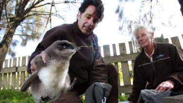 Biologist Andre Chiaradia and research officer Leanne Renwick at the Penguin Parade Reserve on Phillip Island.