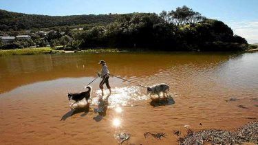 Jennifer Mann and her dogs Bella and Khan walk on Stanwell Park Beach, south of Sydney.