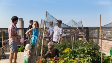 The Commons' rooftop features vegetable patches for each resident and a communal beehive.