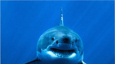 Witnesses said the shark involved in the attack may have been a great white.