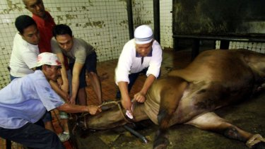 A ban has been proposed on cattle exports to more than 75 Indonesian abattoirs.