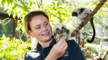 Wildlife keeper, Renee Osterloh feeds the Tamarins with mealworms at The National Zoo and Aquarium.