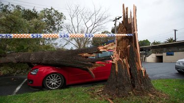 A tree on a car at Chatham station in Surrey Hills.