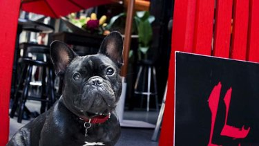 Dogs in the pub ... Yum Cha Sessions at LL Wine & Dine.