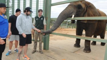 Aaron Woods meets 'Cuddles' at Dubbo Zoo.