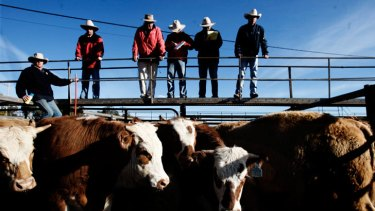 Queensland's farmers are struggling in drought conditions.