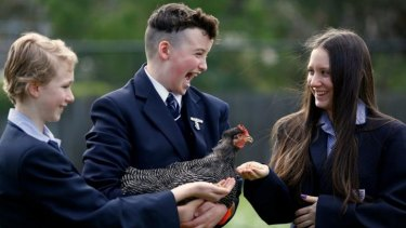Scout Wedding, Jasper Cleary and Brydie Garner get clucky at Templestowe College.