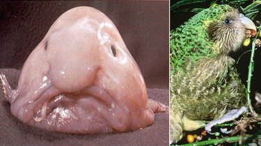 The blobfish which lives off the Australian coast, and the kakapo, a flightless New Zealand parrot, have been named the world's two ugliest animals.