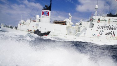 A small boat from the Sea Shepherd vessel, Steve Irwin, makes a reconnaissance trip past the Japanese whaling ship Shonan Maru #2 in January last year.