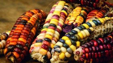 Heirloom corn.