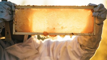 The research found that wounds treated with UMF 20 honey daily for as little as 12 days healed faster than wounds treated with regular honey and untreated wounds.
