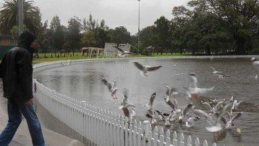 Some like it wet ... Annandale's Jubilee Oval.