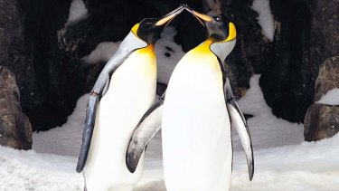 Old Fatihful: Penguins mate for life - what about humans?